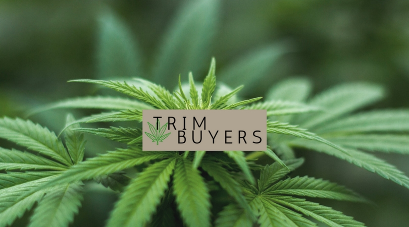 Project: Trim Buyers